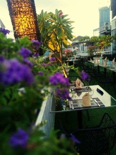 Flower Purple Outdoors Freshness Restaurant Dining