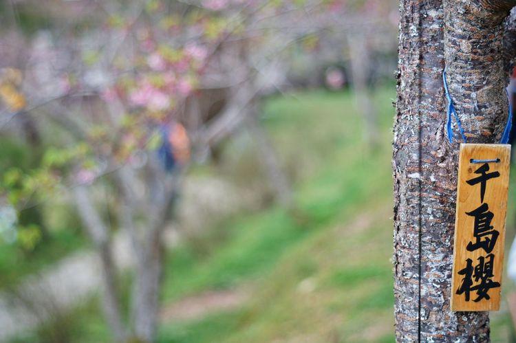 臺灣 恩愛農場 Day Focus On Foreground Multi Colored Outdoors Close-up No People Nature
