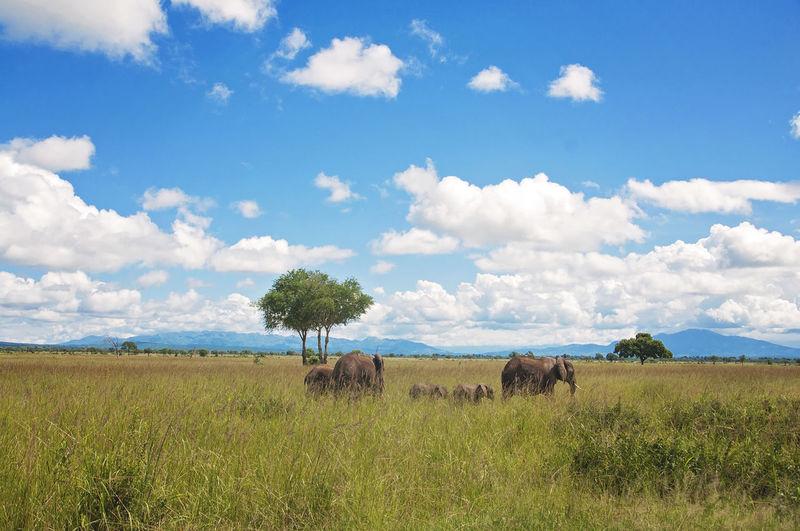 Scenic view of field in tanzania