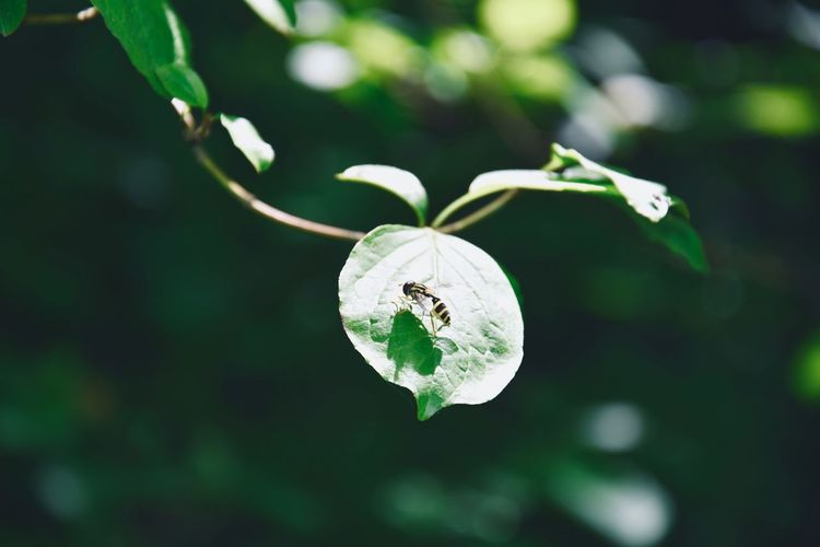 Plant Growth Beauty In Nature Close-up Focus On Foreground Nature No People Fragility Vulnerability  Day Leaf Plant Part Freshness Flower Selective Focus Green Color Flowering Plant White Color Outdoors Bud Flower Head