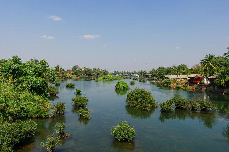 Plants in river