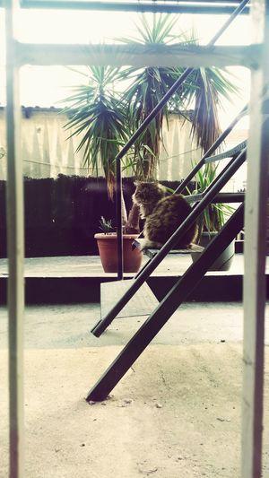 Bugün Sabah Kedi Dinleniyor Tatlı  Güzel Hava Istanbul Hayat