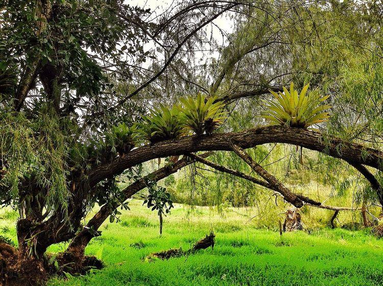 Hugging A Tree Nature Tree Enjoying Life