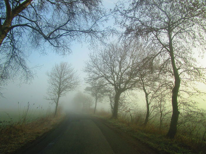 foggy tour 03 Foggy Foggy Morning Foggy Day Foggy Weather Foggy Landscape Fantastic Exhibition Great Atmosphere Special Moment Silence Of Nature Silence Moment EyeEmNewHere EyeEm Best Shots EyeEm Nature Lover Eyeem4photography EyeEm Gallery Tree The Way Forward Direction Plant Fog Transportation Road Diminishing Perspective Tranquility Nature Beauty In Nature Tranquil Scene vanishing point No People Bare Tree Sky Day Scenics - Nature Land Outdoors Treelined Long