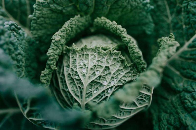 Close-up of fresh green leaf in garden