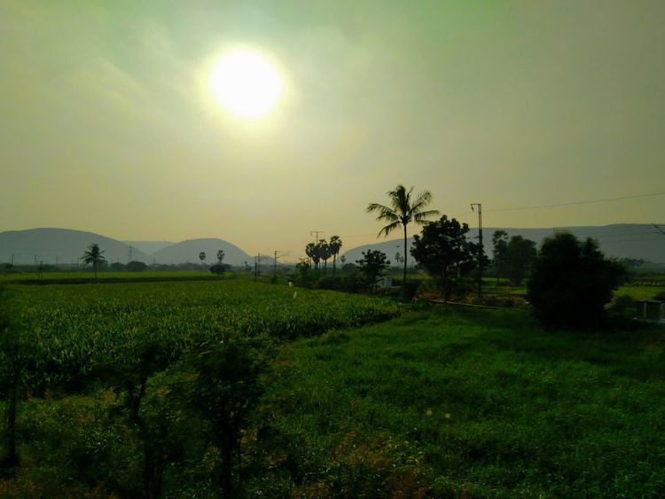Sunset by Lush Green Fields PhonePhotography Unedited Nofilter Indianrailways Tree Field Agriculture Landscape Nature Sun Beauty In Nature Rural Scene Scenics Outdoors No People Tranquility Palm Tree Sunset Sky Growth Rice Paddy Water Clear Sky Irrigation Equipment
