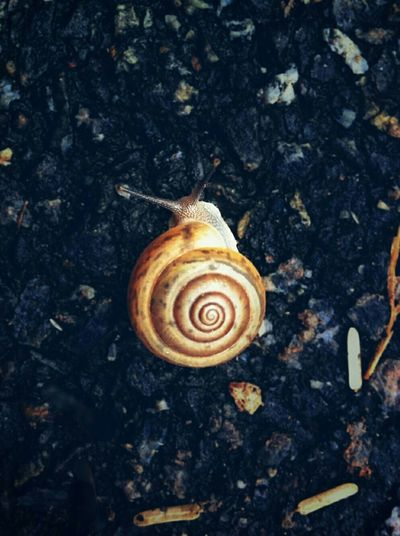 Close-up of snail shell on ground