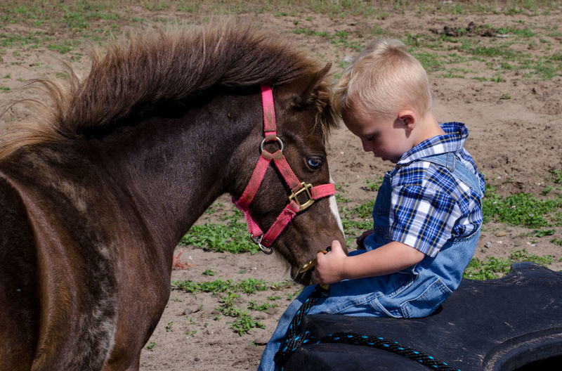 Toddler boy and his pony bond in this sweet outdoor photo Farm Animal Girl Child Feed  Little Fun Grass Portrait Play Kid Cute Young Pet Happy Livestock Happiness Smile Caucasian Country Domestic Nature Game Education Outdoors Beautiful person Mammal Childhood Summer Friend Care Close Outside Leisure Countryside Youth Agriculture Casual Playful Adorable Farming Touch Horse Equine Boy Male Blond