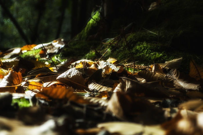 Forest of Bere Forest Of Bere Creech Woods Hampshire  England Leaf Leaves Autumn Woods Tree Forest Close-up