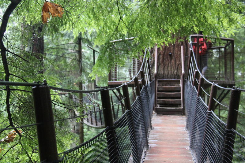 Beauty In Nature Day Footbridge Forest Green Color Growth Nature No People Outdoors Plant Rainy Days☔ Tranquil Scene Tranquility Tree Tree Top Adventure Tree Trunk Vancouver BC