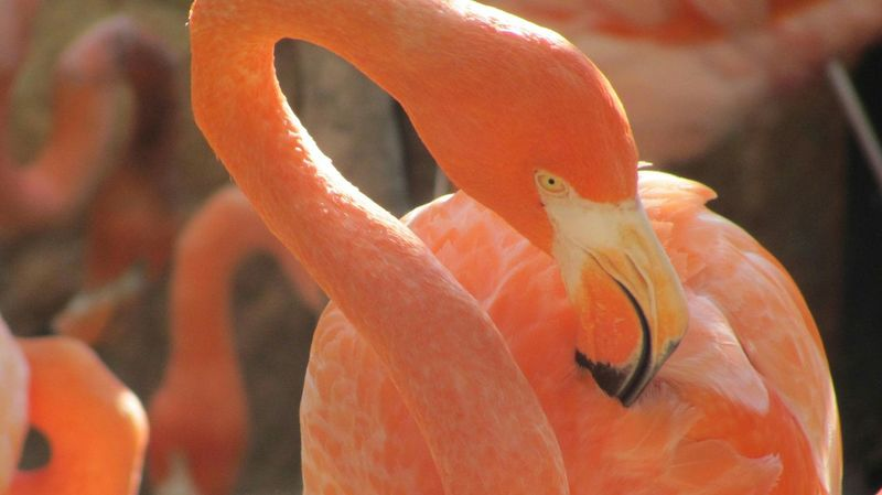 Flamingo Nature Photography Nature Beautiful Beauty In Nature Beauty Flamingoes Flamingos Up Close