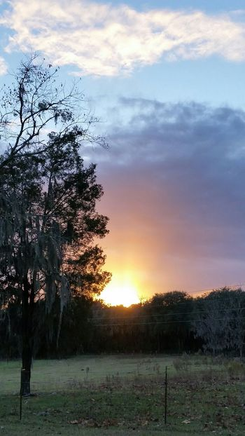 Pretty sunset ❤🌞 Nature Florida Weather Landscape Clouds Outdoor Photography Hobbyphotography Phoneography Samsung Galaxy S5 November 2015 Florida Sky Taking Photos Hello World Trees Sunset Fall Sunset