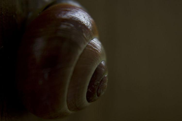 Close-Up Of Shell At Night
