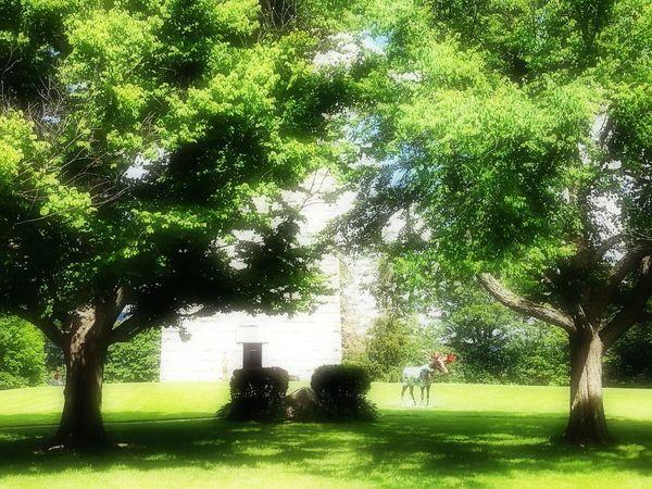 Trees In The Park, Grass, Green Color, Monumental Buildings The Week On EyeEm EyeEmNewHere