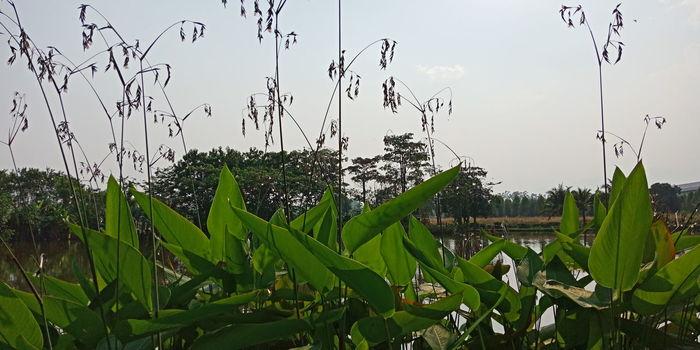 Bird Tree Leaf Sky Animal Themes