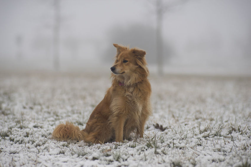 Animal Animal Themes Brown Day Dog Fog Half Breed Half Caste Nature No People One Animal Outdoors Snow Winter Pet Portraits