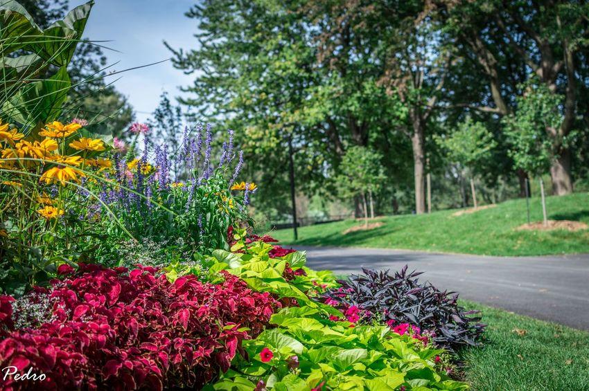 Flowers Nature Nikon 50mm F/1.8 Nikon D3200