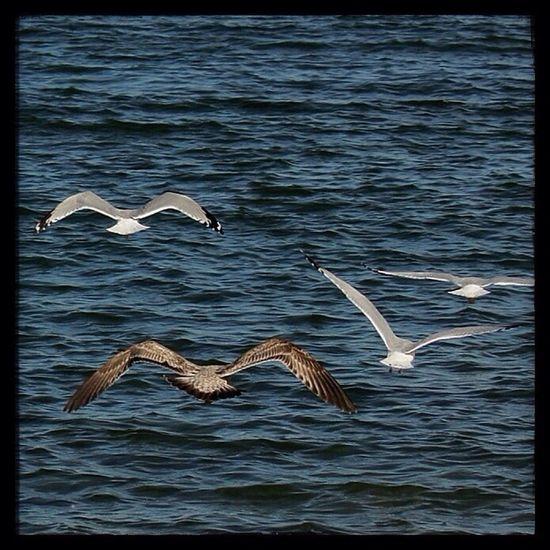 Ashtabula County Seagulls