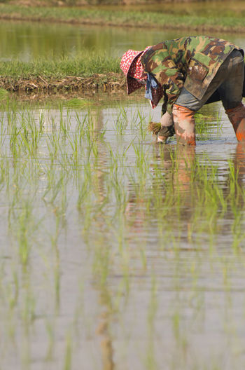 Woman Working In Rice Paddy