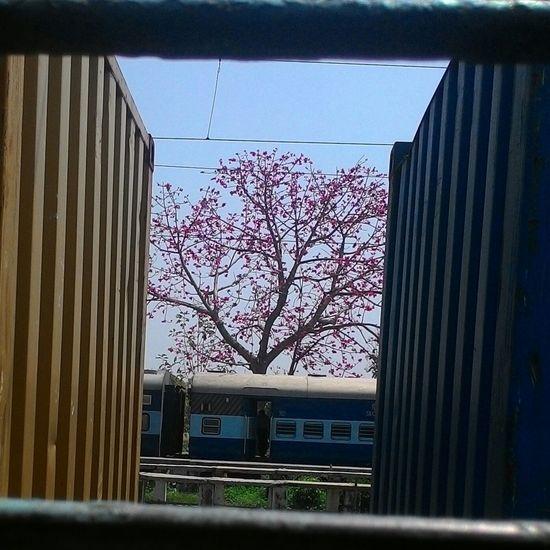 Train Trainwindow Gwalior Nofilter Unedited Red Beautiful Tree Nature