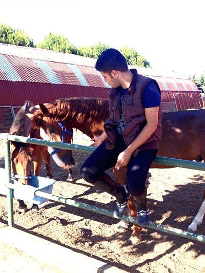 Horse Equstrian Riding Padok Bigjoe