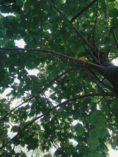 Tree Natural Everyday Life Scenery💋