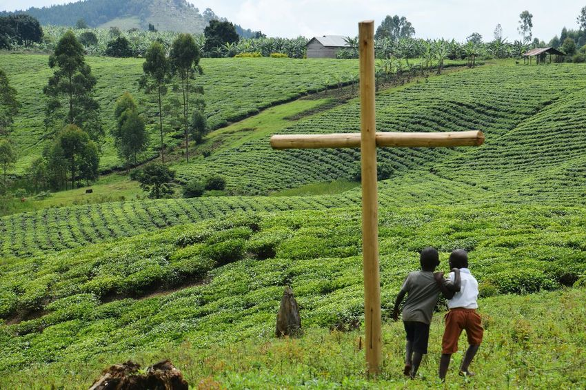 Nyakatooma Uganda Cross Hills Children Two Children Tree Agriculture Field Sky Green Color Cultivated Land Plantation Tea Crop A New Beginning