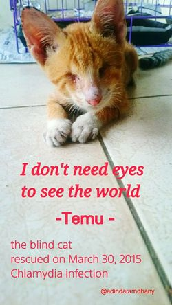 BlindCat Mypet EyeEmer Catlovers Animallovers Love Friendship Temutheblindcat Popular Photos OpenEdit
