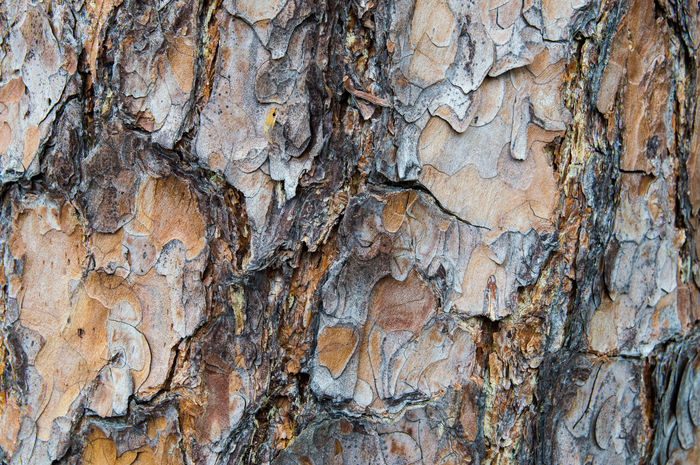 rough Backgrounds Bark Texture Close-up Full Frame Natural Pattern Nature Pattern Pine Bark Pine Tree Plant Plant Bark Textured  Textured Effect Tree