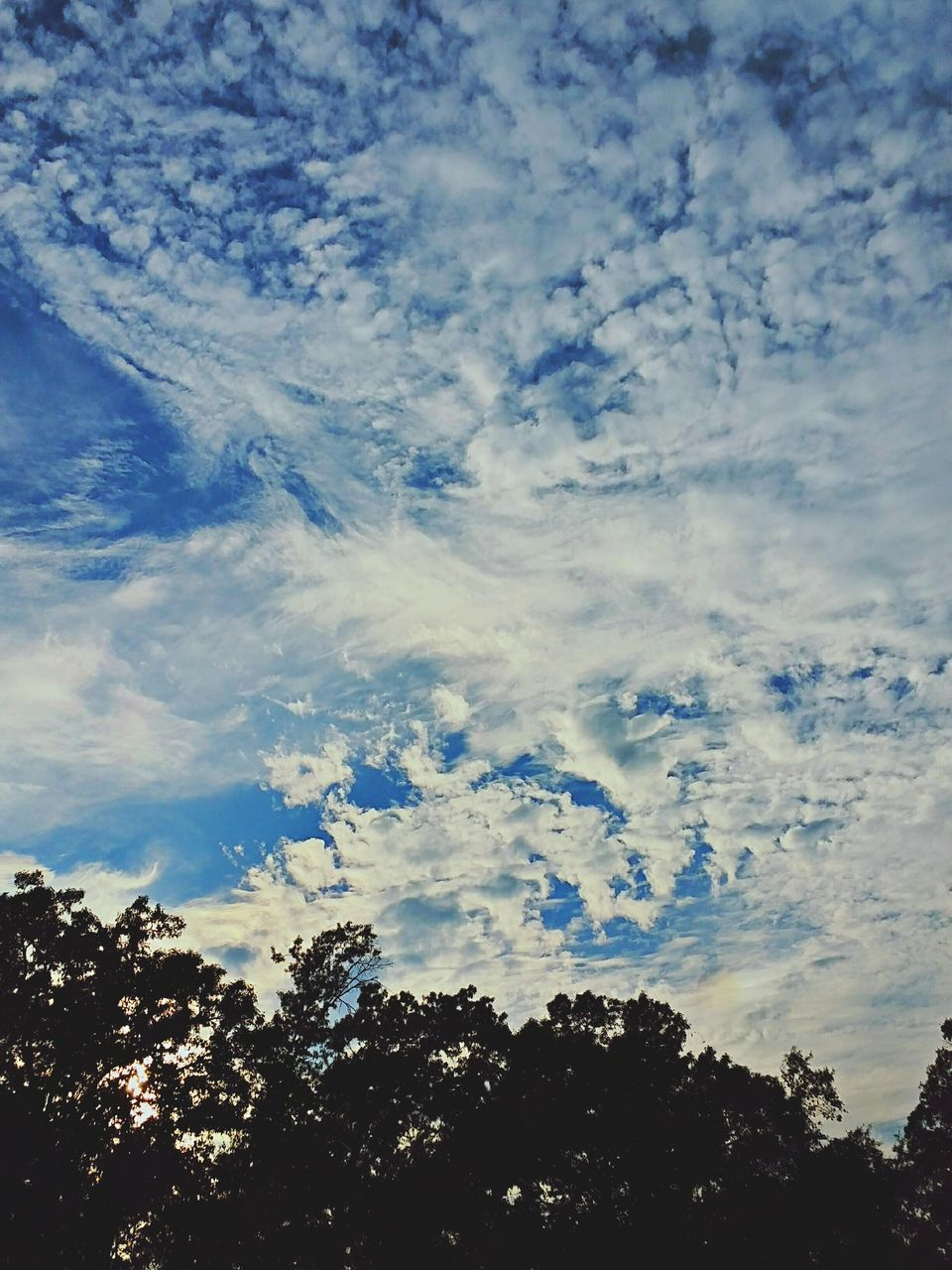 sky, beauty in nature, nature, tree, low angle view, tranquility, no people, silhouette, scenics, outdoors, cloud - sky, tranquil scene, day, blue, growth