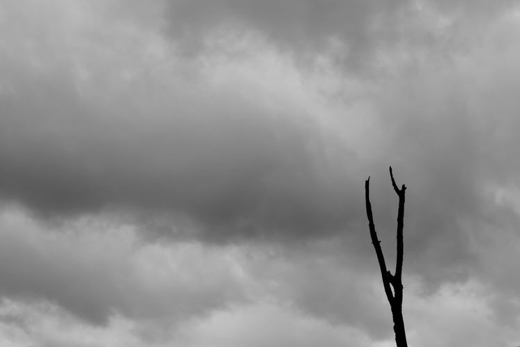 Scenics Tranquil Scene Tranquility B&W Magic Black & White Cloud Cloudscape Dead Tree Dramatic Sky Rain Storm Tree Backgrounds Beauty In Nature Black And White Blackandwhite Branch Cloud - Sky Day Low Angle View Nature No People Outdoors Sky Storm Cloud