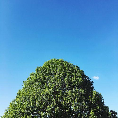 Tree Blue Sky Cloud - Sky Minimal Day Pure