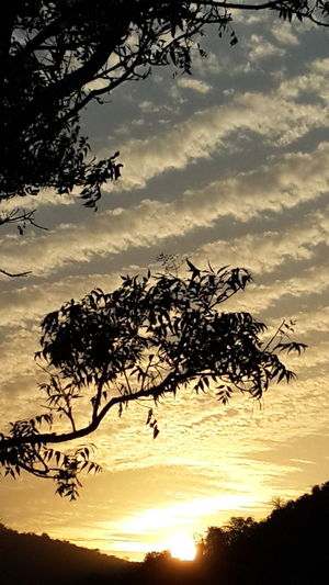 Tree Sunset Silhouette Dramatic Sky Cloud - Sky Nature Sky Tranquility No People Outdoors Rural Scene Scenics Beauty In Nature Landscape Branch Tree Area Day Bird Close-up