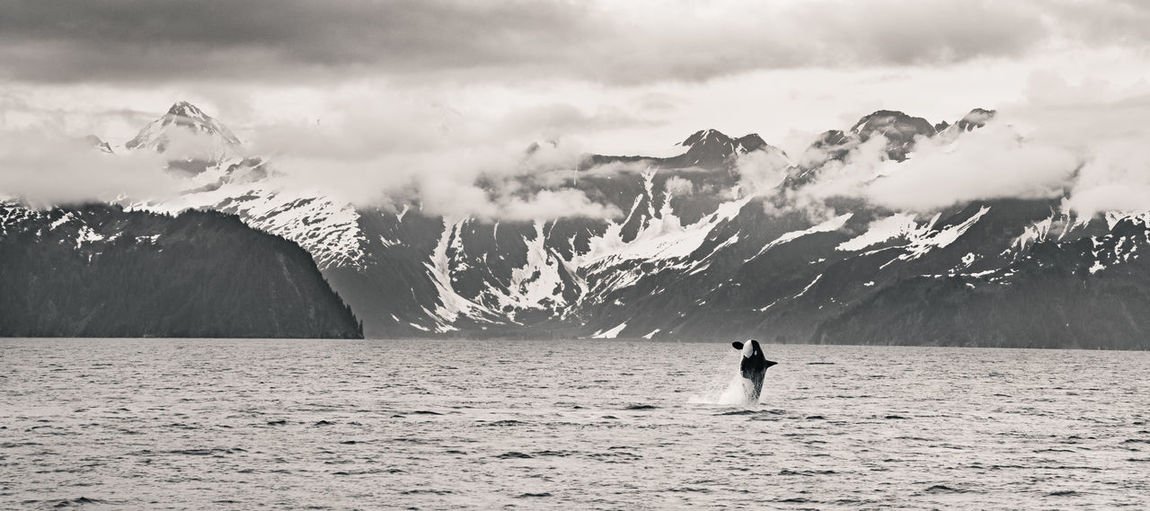 Orca jumping against mountains