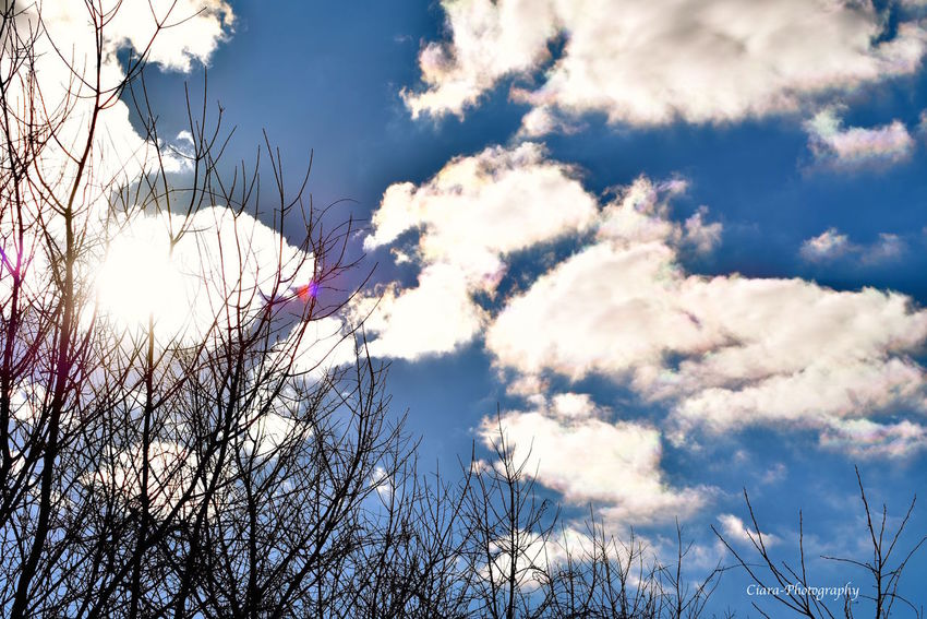 Bright Cloud Cloud - Sky Nature Outdoors Sky Sunlight Tranquil Scene Tranquility Tree