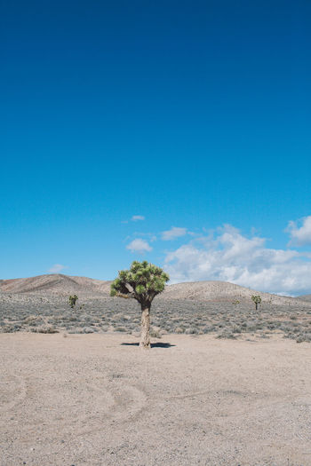 Arid Climate Arid Landscape Beauty In Nature Blue Blue Sky Clear Sky Day Death Valley Death Valley National Park Desert Desert Joshua Tree Landscape Mountains Nature Nature No People Outdoors Roadtrip Sand Dune Scenics Sky Tranquil Scene Tranquility Tree