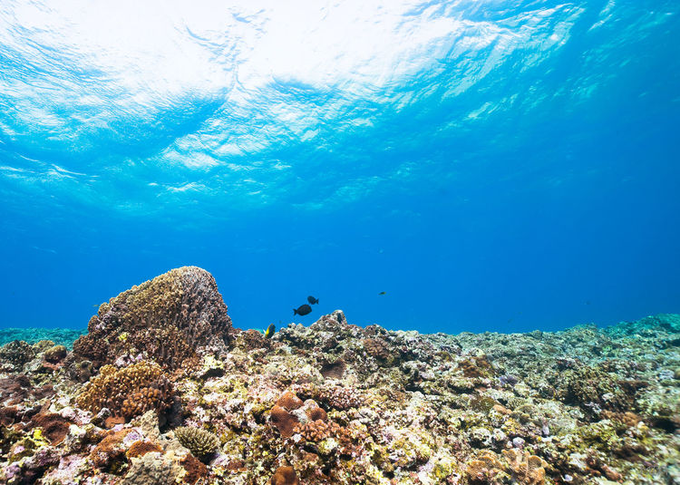 Corals And Rocks In In Sea