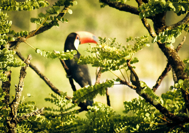 Animal Themes Animal Wildlife Beauty In Nature Bird Day Nature No People Outdoors
