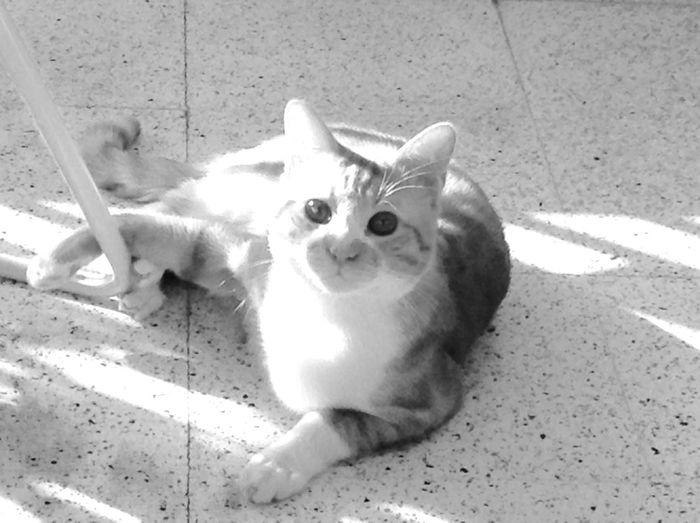 P Cat♡♡ Cats Mycat Iwillmissyou