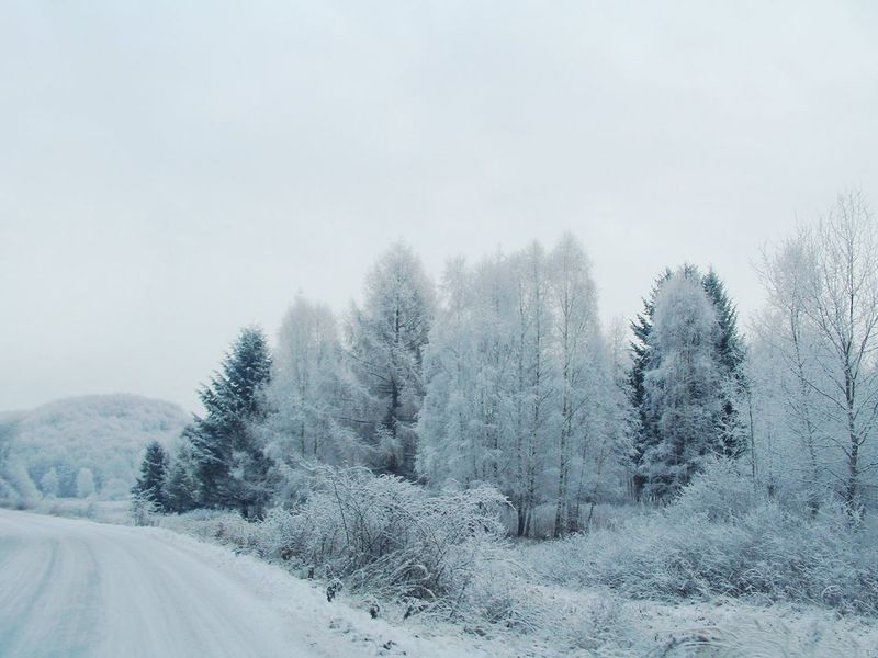When your family doesn't stop the car every 5 seconds so you could take some photos... Beauty In Nature Bükk Car Ride  Cold Temperature Forest Frost Hungary Landscape Mountains Nature No People Outdoors Road Scenery Snow Snowing Tranquility Tree Trees Weather Winter Winter Wonderland Woods