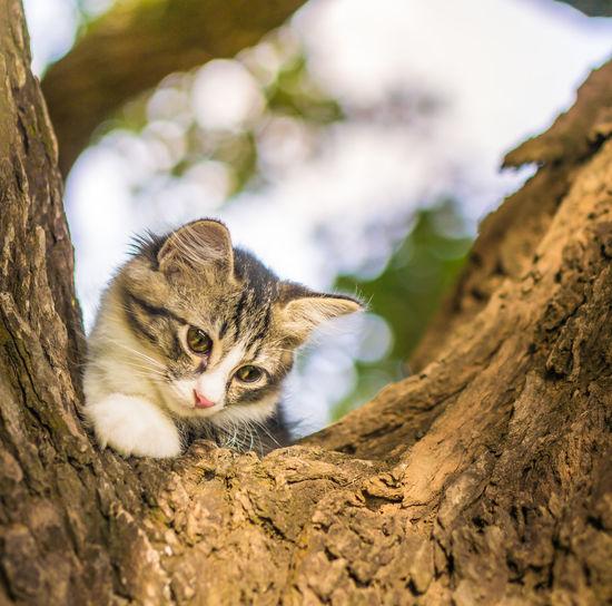 Close-up portrait of kitten on tree