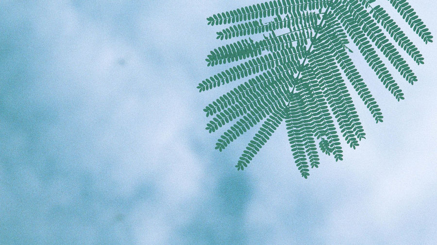 No People Cloud - Sky Growth Nature Tree Sky Plant Day Leaf Low Angle View Green Color Plant Part Pattern Close-up Data Technology Outdoors Beauty In Nature Studio Shot Backgrounds