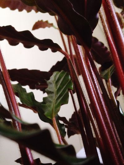 🌴🌲🍁🍃🍂🌿 Redroots Plants 🌱 Taking Photos