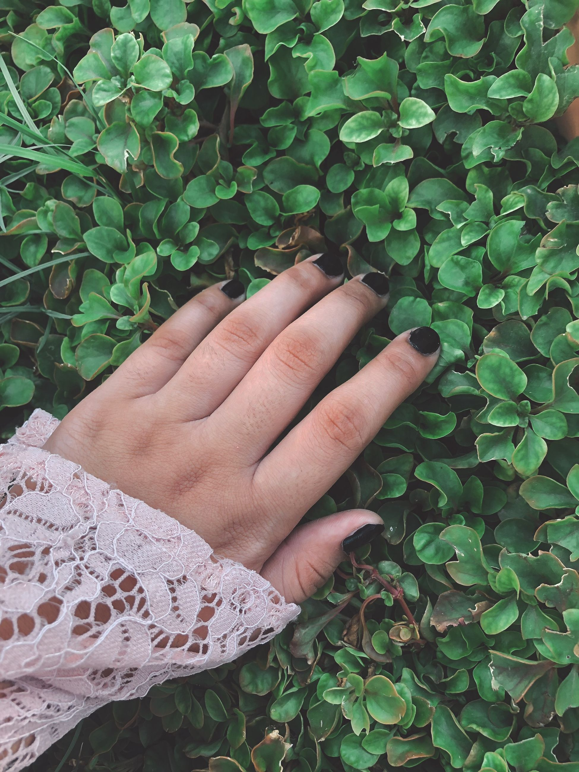hand, leaf, human hand, plant part, human body part, green color, one person, real people, plant, finger, human finger, growth, body part, nature, unrecognizable person, day, lifestyles, close-up, touching, outdoors, clover, leaves, human limb