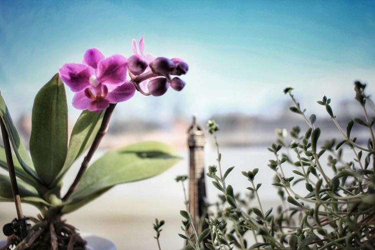 🌺📸 snapshot 🙃 Flower Purple Focus On Foreground Close-up Flower Head 24mm Canonphotography Canon_photos Orchidee Hello World Taking Photos EyeEm Gallery Enjoy The Silence Weekendvibes Nature Enjoying Life Check This Out Photooftheday Photpgrapher EyeEm Best Shots EyeEm Best Edits Eyeemphotography Blue Sky Light HDR