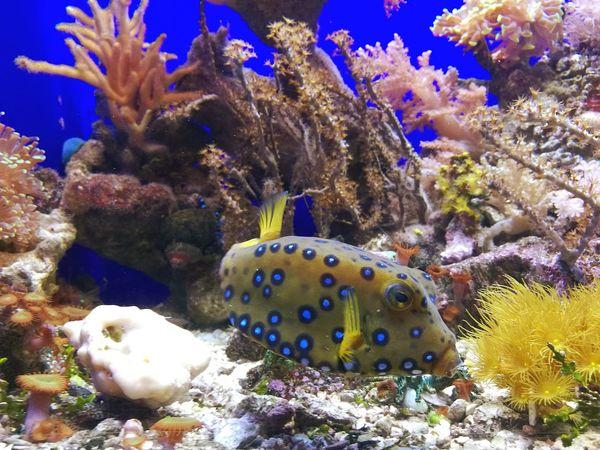 Colour Of Life Fish Acquariodigenova Sea Mare Corallo First Eyeem Photo Pic Picoftheday