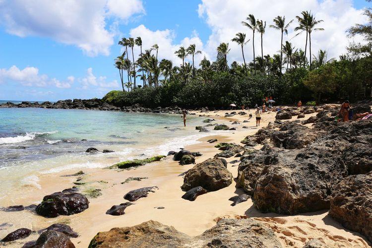2015  Beach Day Hawaii Laniakea Beach Nature O'ahu Outdoors Palm Tree Rock Sea Sky Tree Tropical Climate Vacations Water オアフ島 ハワイ ビーチ ラニアケアビーチ