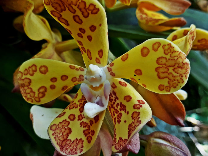 EyeEmNewHere Orchid Blossoms Beauty In Nature Close-up Flower Growth Nature No People