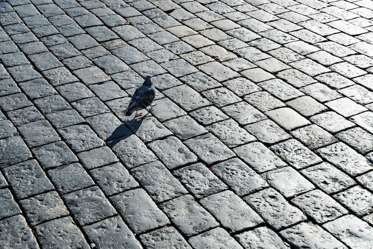 High angle view of bird on cobblestone