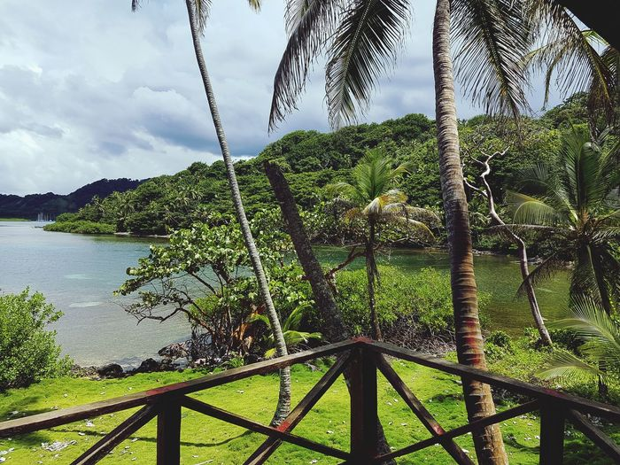 Caribe In PANAMA Nature Green Color Water Beauty In Nature